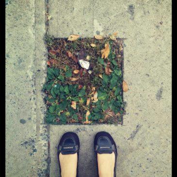 Urban Medicine Walk