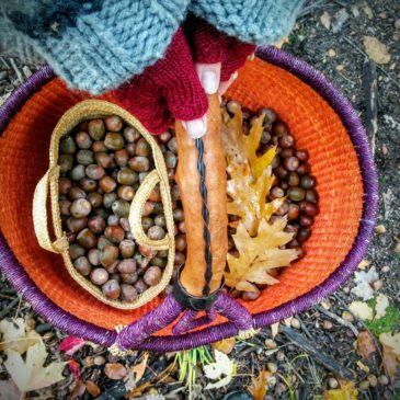 Acorns: gourmet survival food